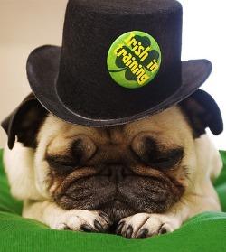 Pug Parade